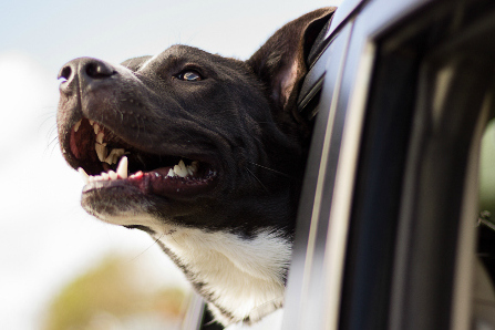 Is Your Pet's Bad Breath Telling You More Than You Realize?