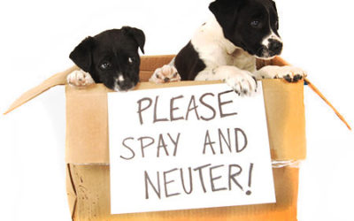 March Promotion – $25 Off Spay or Neuter