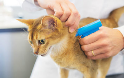 Should I Have My Pet Micro-chipped? What are the Benefits? Does It Hurt? Watch This Video…