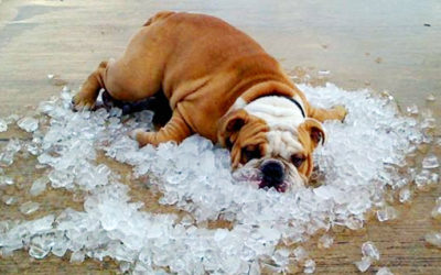How to Prevent Your Pet From Getting Heat Exhaustion or Heat Stroke…