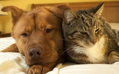 December Promotion – Senior Pet Awareness Month – Discounted Senior Bloodwork With Exam…