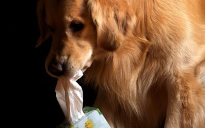 How We Diagnose and Treat Dog Allergies…