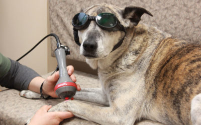 Laser Therapy – A Drug Free Alternative To Alleviate Pain and Stimulate Healing For Your Pet…