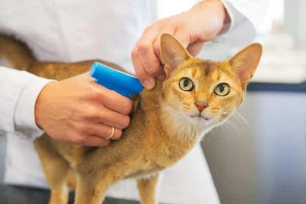 Cat Microchip Sale