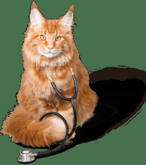 Cat Vet Milford OH
