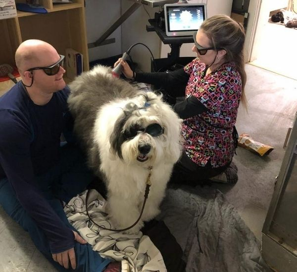 Laser Therapy for Pets Near Me