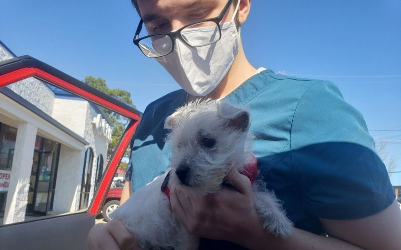 A Companion Animal Medical Centre employee carrying a client's small white dog.