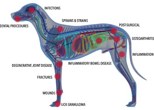 A graphic showing all the potential aliments laser therapy could treat on a dog.
