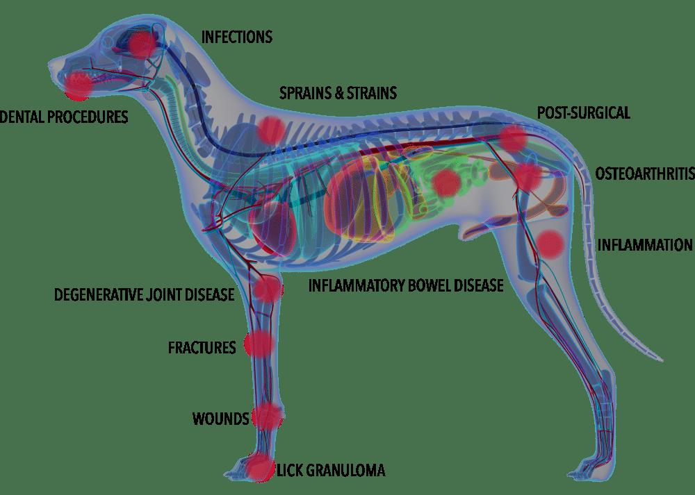 Anatomy of a dog