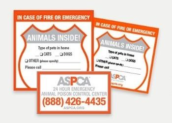 Easy Pet Safety Pack For Emergencies